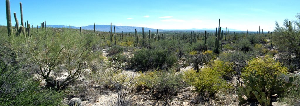 Landscape near Sabino Canyon