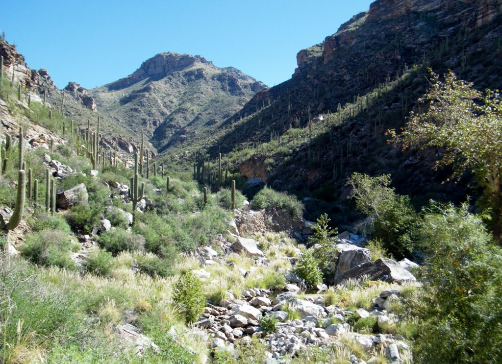 To get to Seven Falls you will hike in Bear Canyon. This is Bear Canyon. And we didn't see any bears.