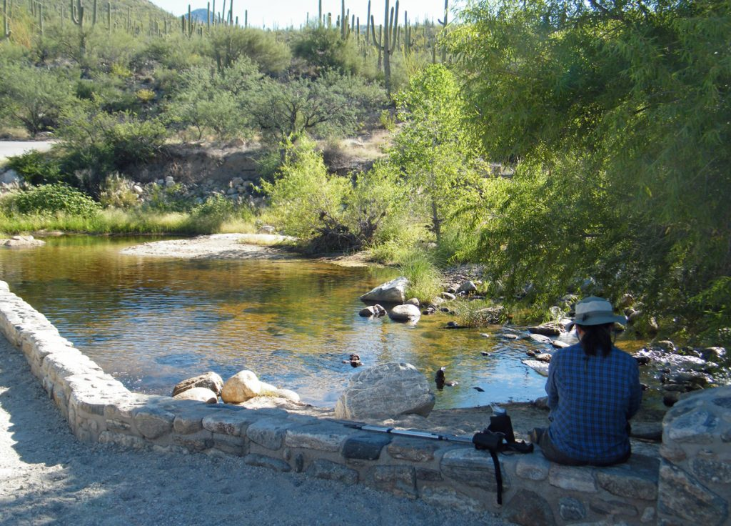 Taking a break at Sabino Creek near the visitor center.